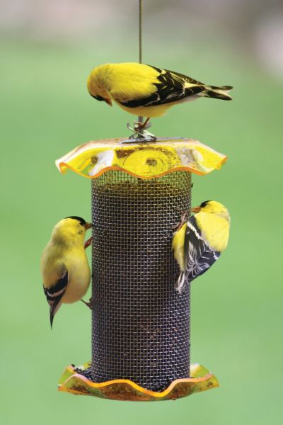 1 Quart Forever Nyjer Thistle Feeder ? Yellow | Birds Choice #FF116A