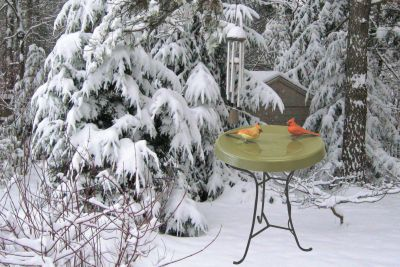Heated Bird Bath-Pedestal -Green | Birds Choice #HPED-GR
