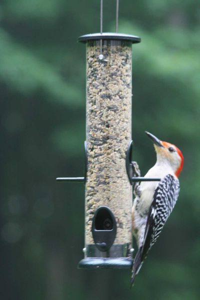 Low Cost Wild Bird Tube Feeder - 4 Ports - 3 Cup