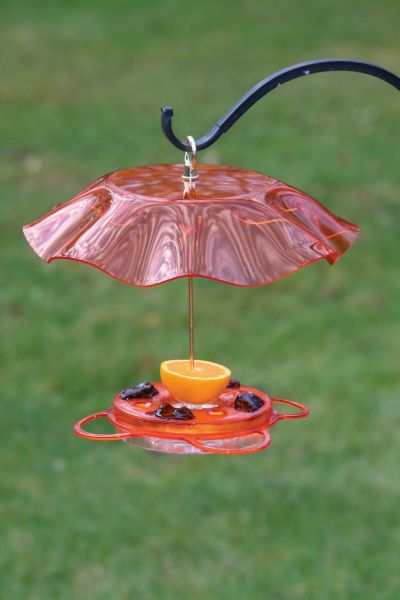 Translucent Oriole Feeder with Orange Weather Guard | Birds Choice #NP1012