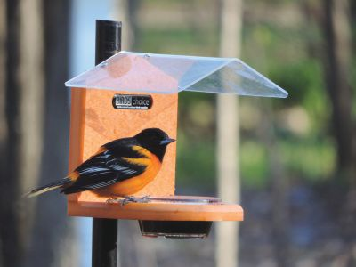 Pole-Mounted Jelly Feeder w/Roof | Birds Choice #SNJF