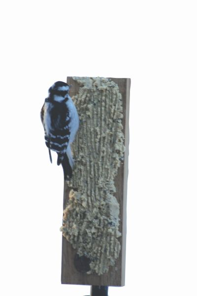 Suet Board with Pole Clamp | Birds Choice #WCBOARD