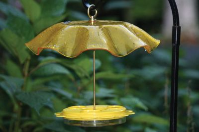 Weather Guard ? Yellow - | Birds Choice