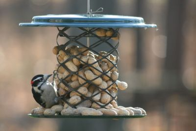 Whole Peanut in the Shell Metal Feeder | Birds Choice #XWPF