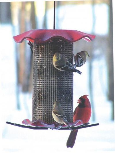 3 Quart Sunflower Forever Hanging Tube Feeder - Red Top and Bottom | Birds Choice #FF214