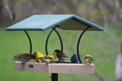 Med. Fly-Thru Platform Bird Feeder, Seed Catcher, Pole System w/ Squirrel Baffle Combo #4