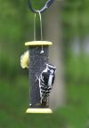 Low Cost Nyjer Thistle Bird Feeder