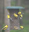 3 Quart Metal Safflower Wild Bird Feeder | Birds Choice #SAF