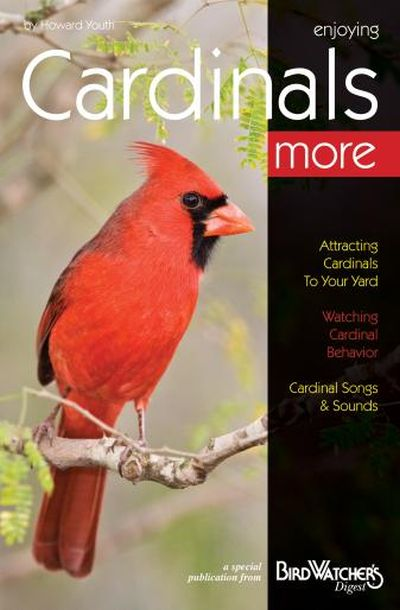 Enjoying Cardinals More