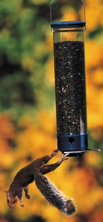 Yankee Whipper Squirrel Proof Feeder